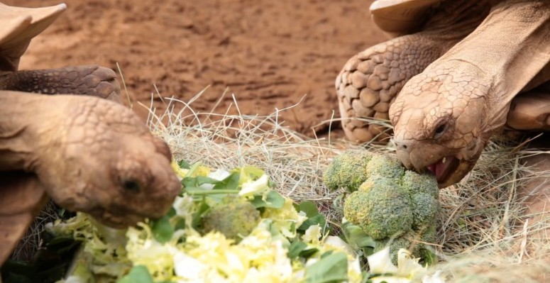 Loro Parque introduce nuevos frutos tropicales a sus cultivos ecológicos (4)
